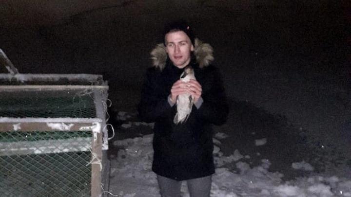 На новосибирском озере спасли раненую утку, за которой гонялись на надувном матрасе