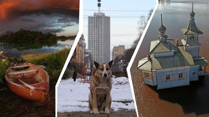 Хатико с Чумбаровки, корабли и природа. Смотрим самые популярные фотоснимки 29.RU в Instagram