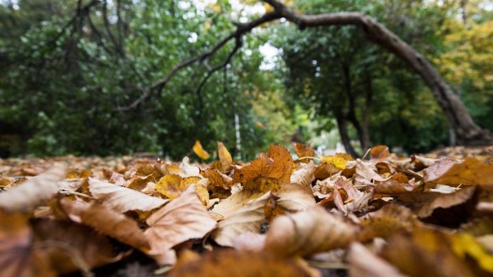 Лето остается, но зонты лучше не прятать: какой будет погода в Ростове на этой неделе