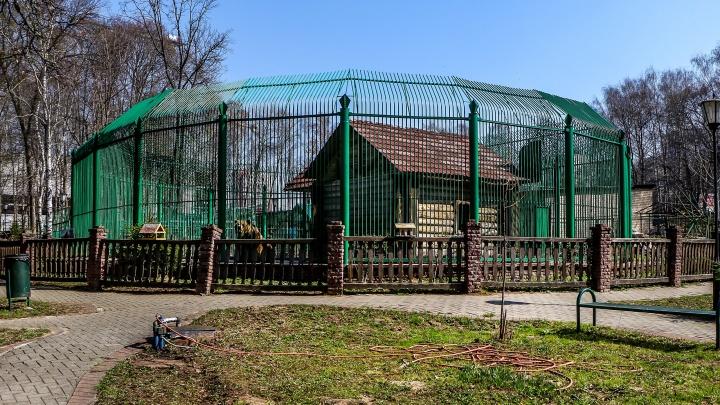 Ещё 18 зверей из нижегородского зоопарка «Мишутка» переехали в другой город