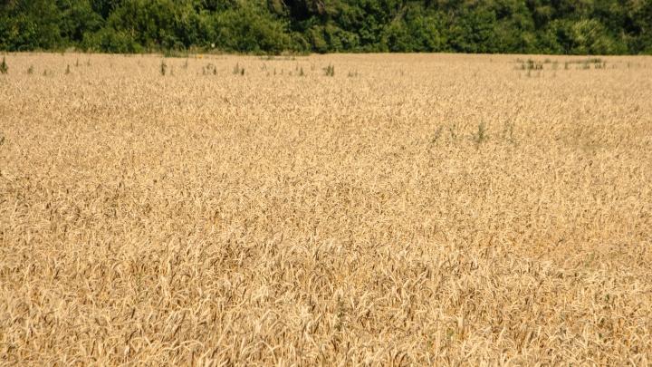 «Сириус», «Антарес» и другие: в посёлке Усть-Кинельский представили новейшие разработки для фермеров