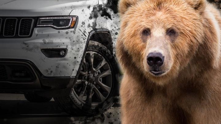 Под Екатеринбургом машина насмерть сбила медведя