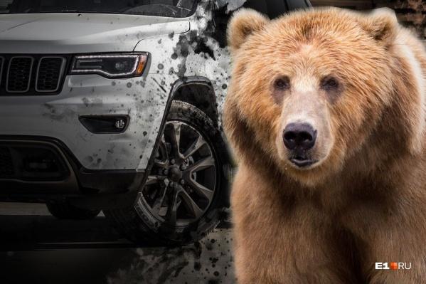 Медведи тоже попадают в ДТП. Это может плохо кончиться для зверя и для водителя