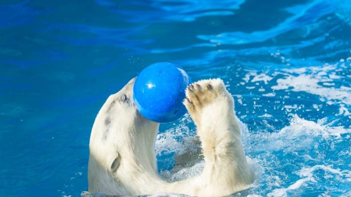 В зоопарке Ростова у белой медведицы Кометы родился малыш