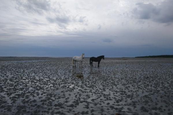 Неожиданная встреча с лошадьми в 30 километрах от деревни