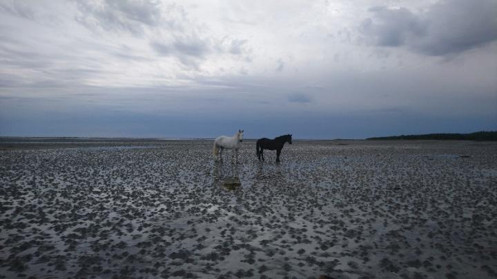 Записки с Белого моря: зачем топтать камбалку и где почувствовать, что ты на краю света. День пятый