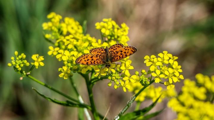 Кому — лето, а кому — кашель и насморк: как аллергикам пережить сезон цветения и пыления растений
