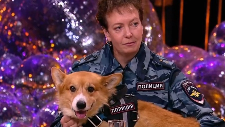 Нижегородский корги-полицейский появился у Малахова в передаче про сотрудников МВД