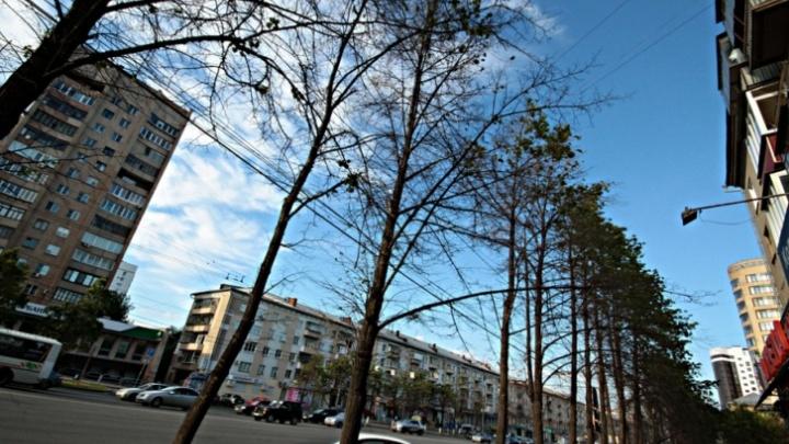 В мэрии рассказали, когда начнут высаживать деревья на главном проспекте Челябинска