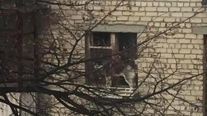 «Оставляли на неделю»: в Екатеринбурге собака, брошенная в квартире, вылезла из окна на четвертом этаже