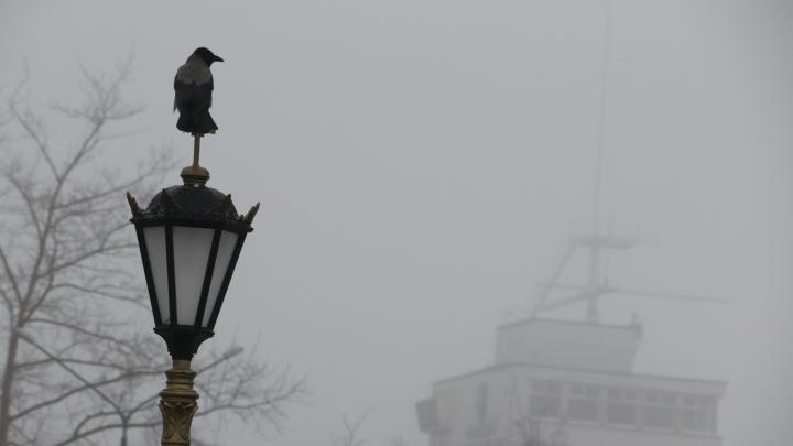 Одинокие прохожие, машины и ледоколы: смотрим на Архангельск, укутанный туманом