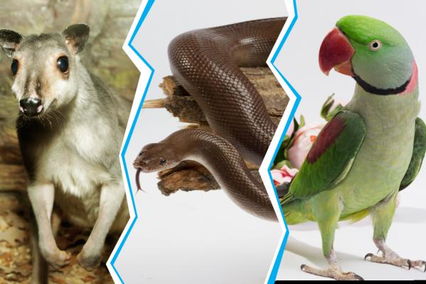 Красавчики— претенденты на звание зоомистера