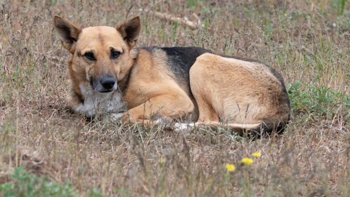 «Увидела, как бабушка отбивается от него сумкой»: под Волгоградом агрессивный пес напал на 17-летнюю девушку