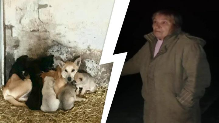 В Артёмовском закрыли «концлагерь» для животных, куда свозили собак со всей области