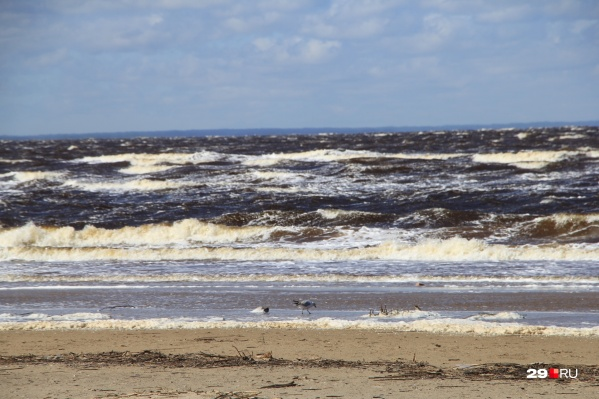 Почти 80% всего собранного на побережье моря мусора оказалось пластиком