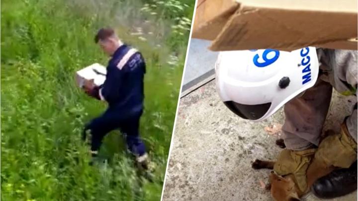 В яму у аграрного университета упал лисёнок: на помощь ему приехали спасатели