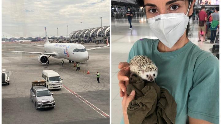 Своих не бросаем: екатеринбурженка вырвалась из Таиланда вместе с ручным ежом