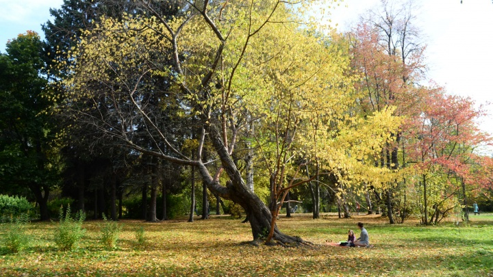 Пересчитают все деревья: кто и как благоустраивает дендропарк около УрФУ