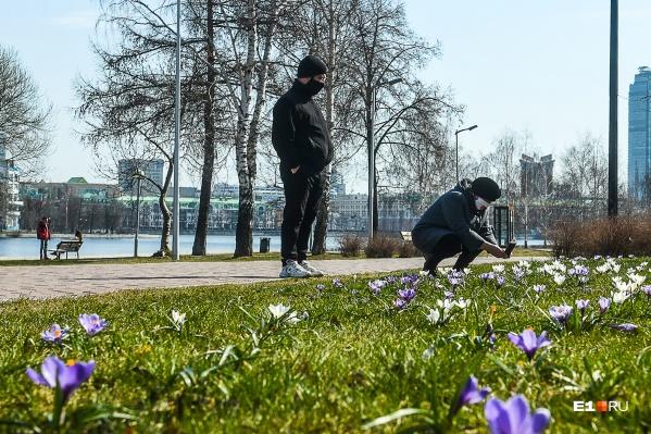 За сутки 43 человека заразились коронавирусной инфекцией в Новосибирской области