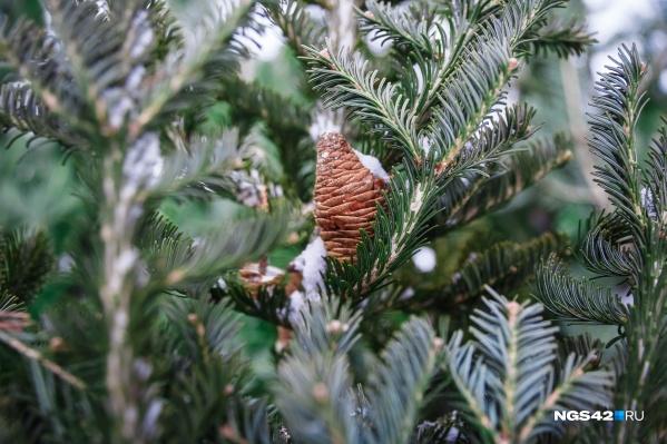 По данным синоптиков, январь в Кузбассе будет морозным и почти бесснежным