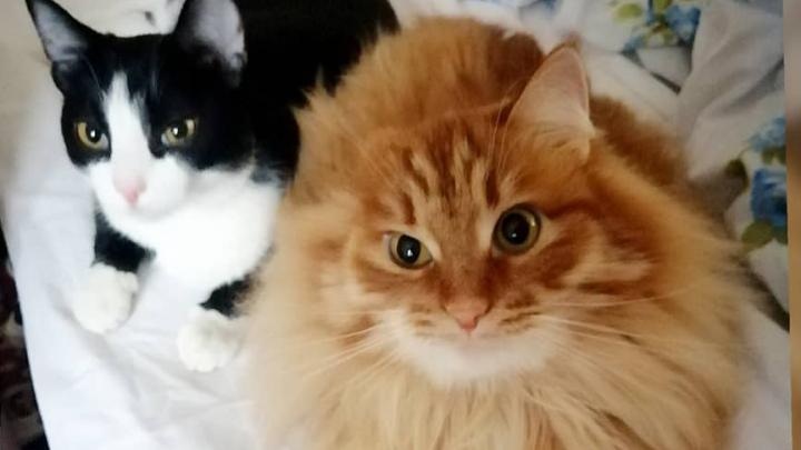 Благодаря другу кот без лапок из Лесосибирска научился ходить и даже бегать