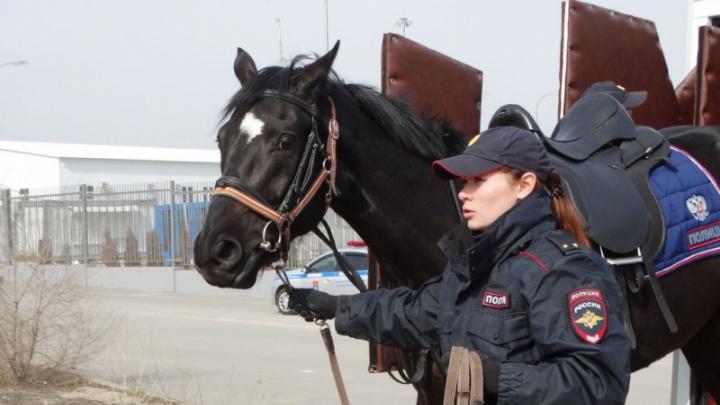 В Волгограде кавалерия вышла патрулировать Мамаев курган
