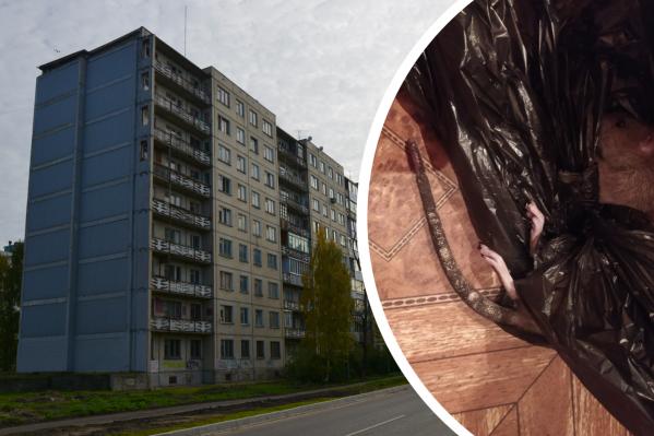 Животные стали появляться в подъезде и квартире на первом этаже — они пролезают через дыры и щели в полу
