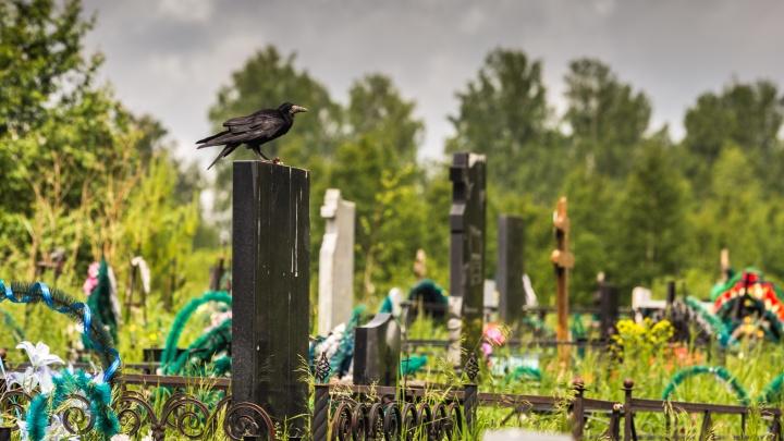 Чтобы гроб вошёл в яму с первого раза: новосибирский «Некрополь» объявил конкурс по копке могил на скорость