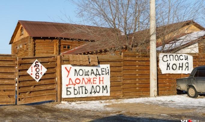 В Волгограде в очередной раз пытаются снести конюшни «Соснового бора»