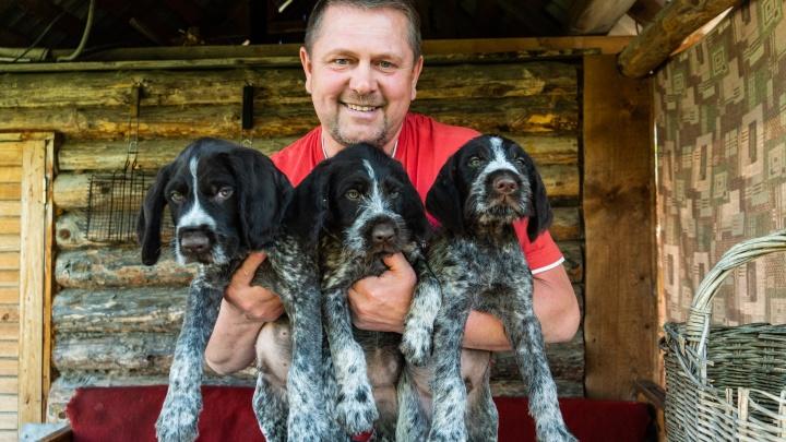 Соревнование со зверем: история омича, который разводит охотничьих собак