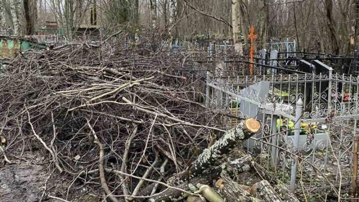 В Архангельске появится учреждение, которое займется озеленением города и содержанием кладбищ