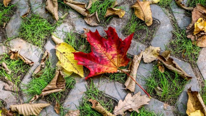 Прогноз погоды: на этой неделе с дождями и ветрами придёт осень