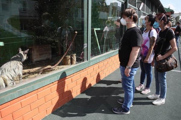 Зоопарк не работал 4 месяца