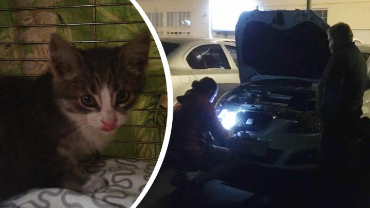 Жалобно мяукал: ярославцы спасли котёнка, застрявшего под капотом машины