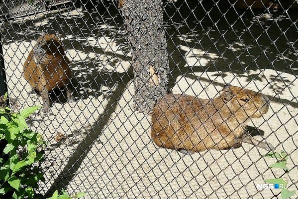 Число посетителей в зоопарке после открытия должно быть не больше 50 человек на гектар