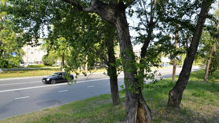 В Кургане вырубят деревья на проспекте Машиностроителей