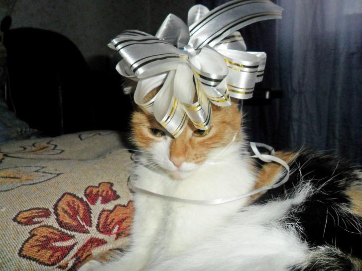 «А ведь намечалась неплохая котовечеринка. Все планы насмарку»