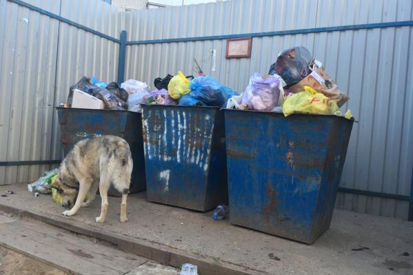 В компании «ЭкоСинтез» сообщили, что они не имеют финансовой возможности вывозить отходы из-за недоплат компании «ЭкоПрофи»