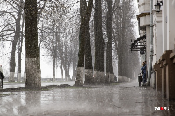 Судя по прогнозам синоптиков, ближайшая неделя в Ярославле выдастся дождливой