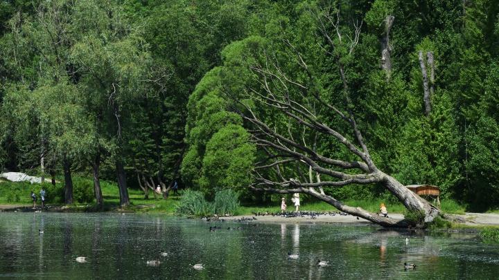 Какие парки Екатеринбурга обработали от клещей: публикуем полный список