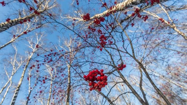 Придут ли морозы на смену теплой погоде — синоптики дали прогноз на ближайшие дни