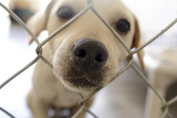 Праздники часто нервируют домашних животных
