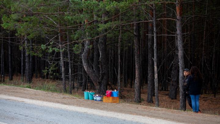 Правда ли, с тюменцев собирают деньги за вход в лес, и откуда взялась «грибная мафия»? Разбор 72.RU