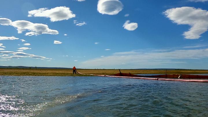На Таймыре ведут забор рыбы для оценки влияния последствий разлива нефтепродуктов