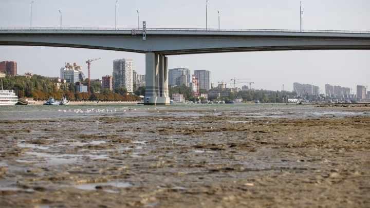 Дно Дона видно: фотопрогулка по обмелевшей реке