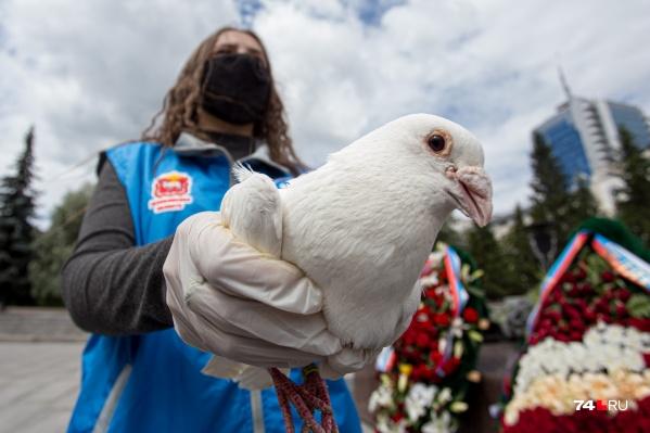 75 белых голубей ровно в полдень выпустили у Вечного огня