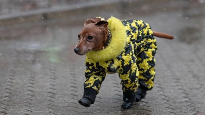 Зимы не будет? Какую погоду ждать в Ростове в эти выходные