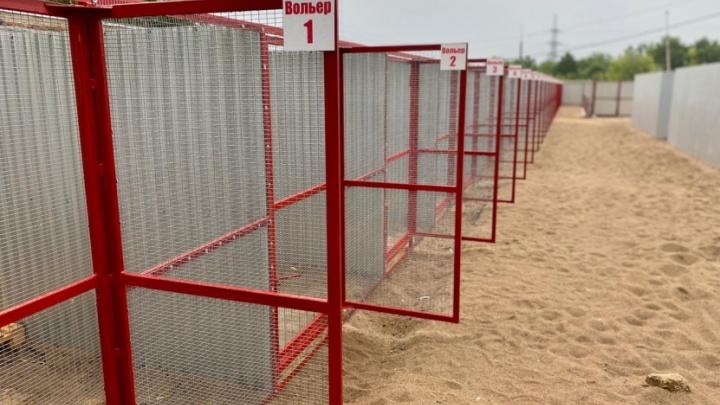 Стало известно, кто будет содержать новый приют для животных в Самаре