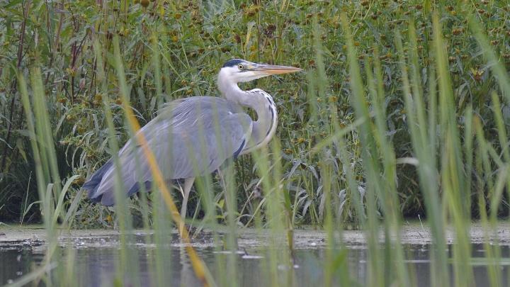 В Ярославской области появится цифровая экотропа для наблюдения за птицами в дикой природе