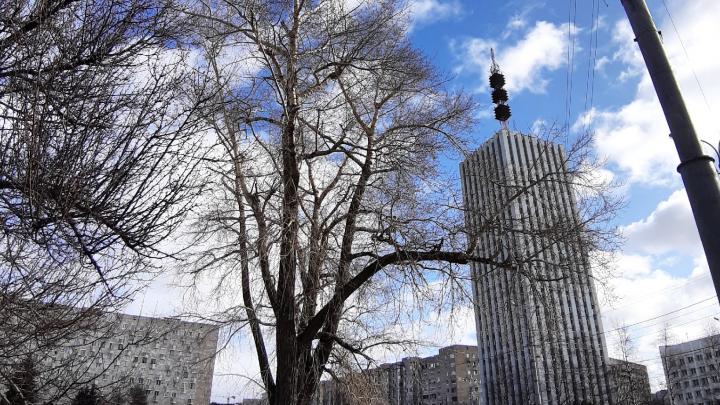 Штрафы от 15 тысяч рублей за отказ от самоизоляции: хроника в Архангельской области на 31 марта